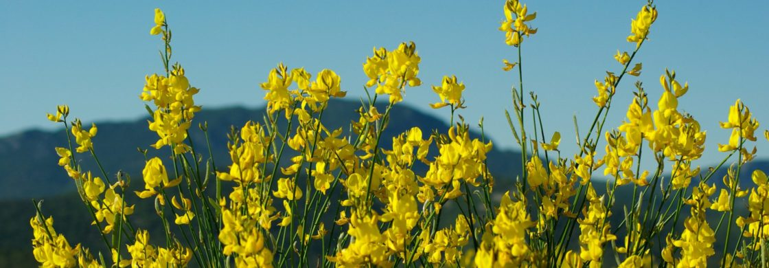 vivi primavera calabria ionica