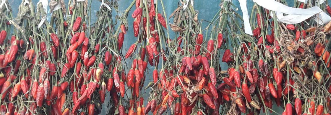 peperoncini calabresi tradizioni enogastronomiche