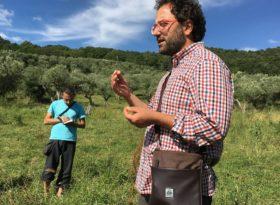 Piante alimurgiche – Corso di riconoscimento delle piante per uso alimentare